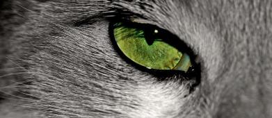 cat-888441_1920