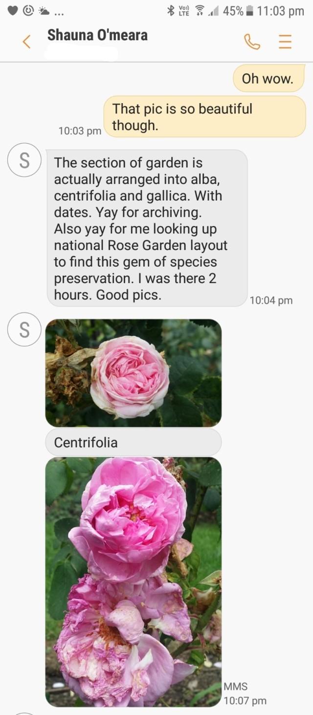Screenshot_20171205 - roses